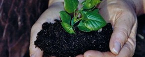 Agriculture : la réutilisation des semences sera sanctionnée